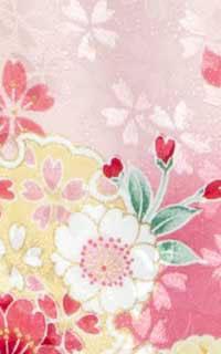 四季ピンク