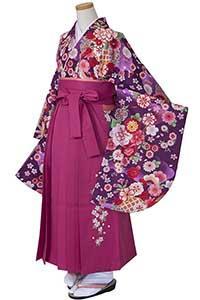 亀甲桜 紫