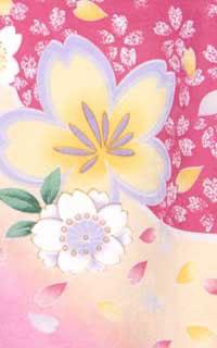 ピンク黄桜Details3
