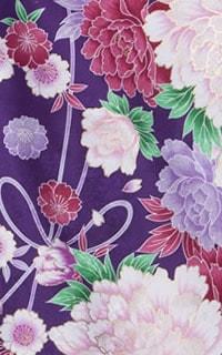 紫百日草Details1