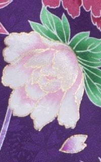 紫百日草Details3