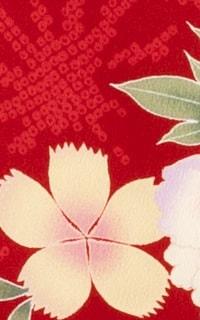 赤の葉牡丹
